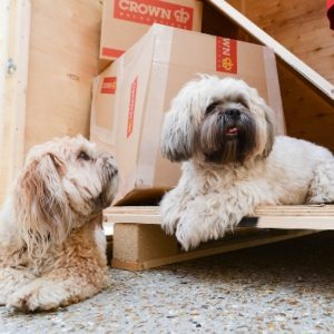 Moving with Pets Made Easy   Crown Relocations