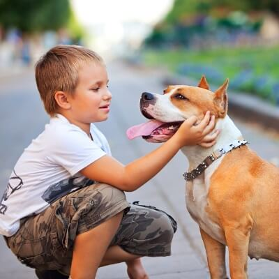 Moving with Pets - Pet relocation service